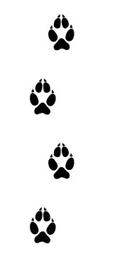 Wolf tracks. Typical footprints of wolves - isolated black icon vector illustration on white background.
