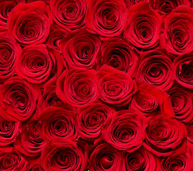 flower rose petal blosspm background