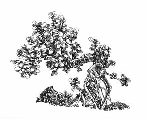 Растение денежное дерево.