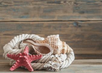 Sea objects - shells, sea stars on wooden planks