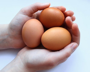 Three chicken eggs in the hands of a brown