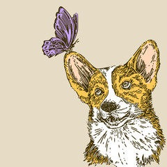 Beautiful vintage background. Corgi and butterfly. Color card. Engraving style. Vector illustration.