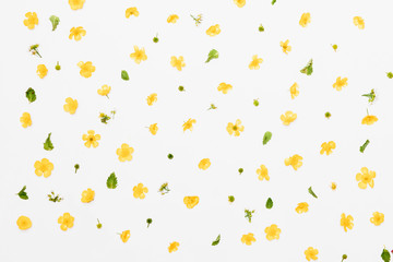 Yellow field flowers with green leaves pattern on white background, flat lay
