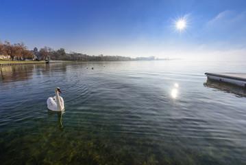 Schwan auf dem Uckersee