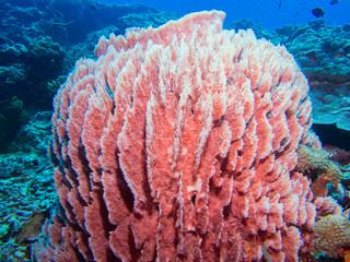 Close-up of a sponge