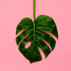 Tropical palm leaf on a light pink background. Minimal nature. Flat lay. Top view.