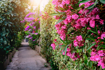 Alley along the red flowers