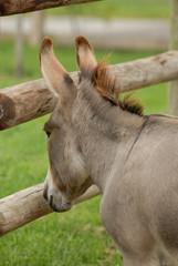 Donkey Dreams