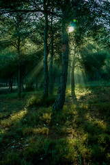 Intense and revealing light among the trees of the forest