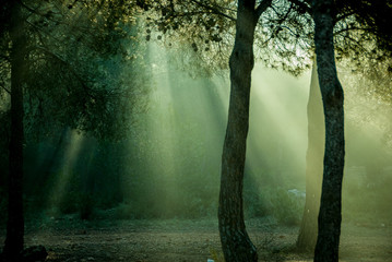 Beautiful rays of light between the trees
