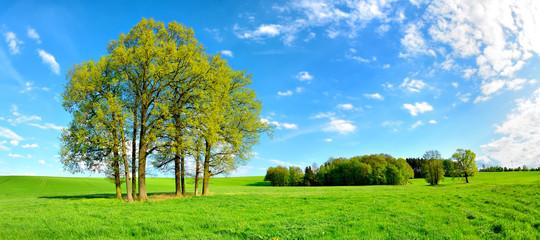 Grüne Wiese mit Baumgruppe unter blauem Himmel im Frühling