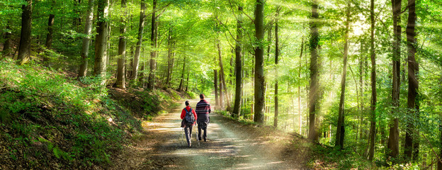 Poster Road in forest Aktivurlaub im Frühling bei einer Wanderung im Wald