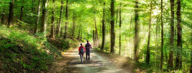 Photo sur Aluminium Route dans la forêt Aktivurlaub im Frühling bei einer Wanderung im Wald