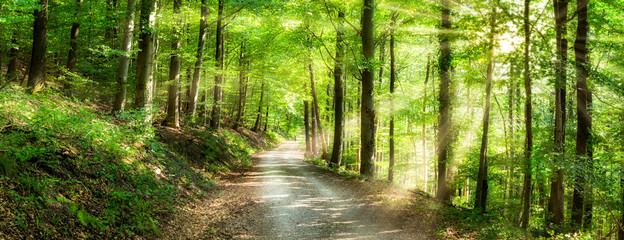 Poster Road in forest Grünes Wald Panorama im Sonnenlicht