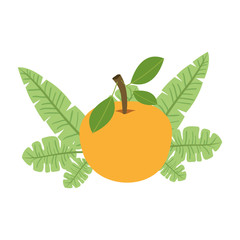 orange with leafs fresh and citrus fruit vector illustration design