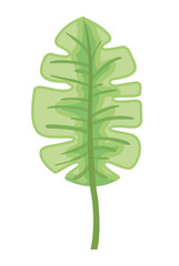 palm leaf ecology icon vector illustration design