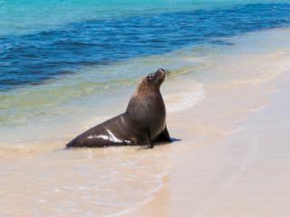 Sea Lion Beach Day