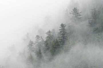 Spruce trees & fog in Peril Strait;  Alaska