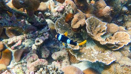 Beautiful coral reef and tropical fish underwater