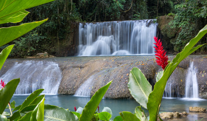 Ingelijste posters Watervallen Scenic waterfalls and lrd flower in Jamaica