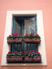 Open Windows in Venice with green shutters and bright pink flowers