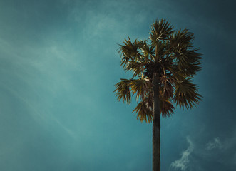 Sugar palm trees on sky background