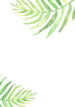 Watercolor Palm leaf background. Green on white watercolor hand drawn illustration. Green tropical palm leaf. watercolor watercolor card, postcard, invitation