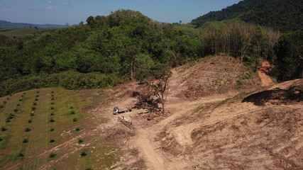 Deforestation. Logging of rainforest. Forest destroyed for oil palm industry