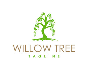 Willow Tree Symbol Logo Vector