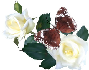 isolated brown butterfly on white roses