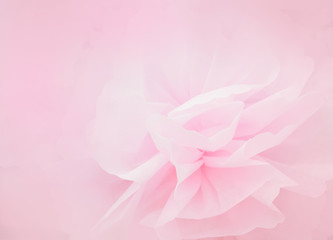 Pink petal flower in soft style for background