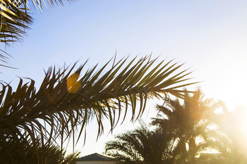 Green palm branches against the blue sky. Summer holiday concept