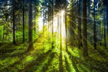 Grüne Waldlichtung im Sonnenlicht