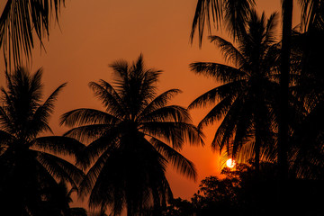 Sun Setting between coconut tree shadow, Silhouette shot