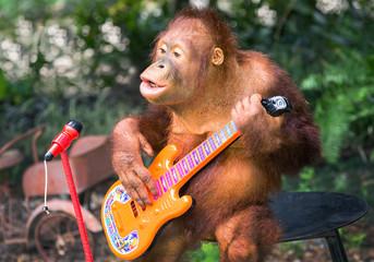 Orangutan playing music and singing.