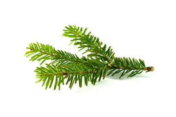 Fir tree branch isolated on a white background.