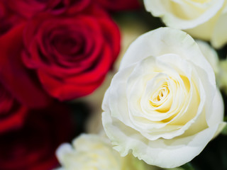 close - up background of red roses and white, a symbol of love and friendship