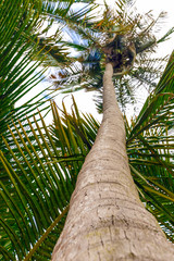 The trunk of a palm