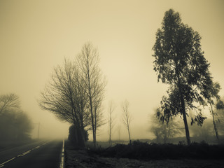 Fog in the morning