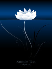 lotus flower or water lily on water surface, underwater perspective stylized vector