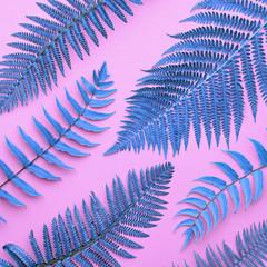 Creative Tropical Fresh Fern Leaves. Fashion Nature Background. Neon Blue Summer Surreal Design. Bright Pink Summer Color. Beach leaf background. Art. Detail