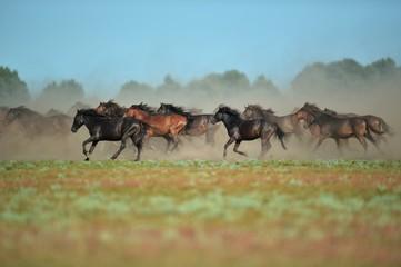 wild horses riding