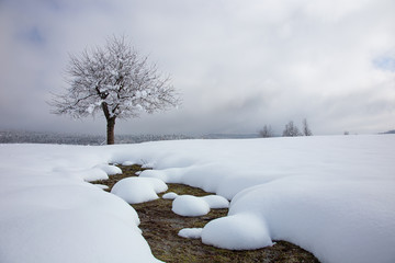 Snowy landscape with fresh snow, idyllic snowy tree and green grass, Planina field, Slovenia, background, christmas cards, desktop