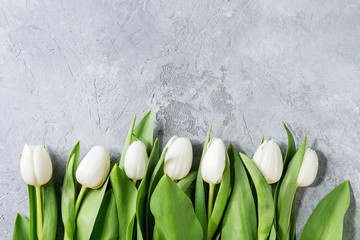 White spring tulips with leaves over grey texture background. Top view, space. Spring greeting card