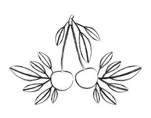 cherries fresh fruit with leafs frame vector illustration design