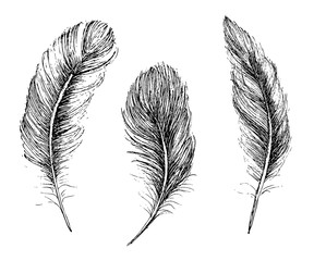 Feather Pattern hand drawn