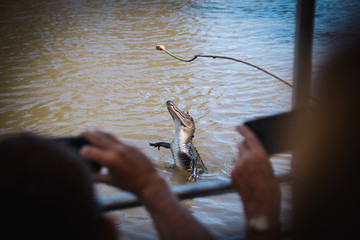 Tourists photograph the feeding of an alligator
