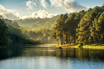 Beautiful landscape view of pine forest and lake view