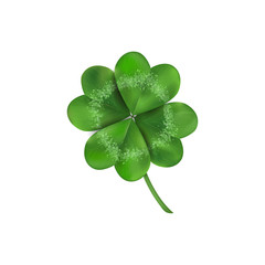 Lucky four leaf clover isolated on white background
