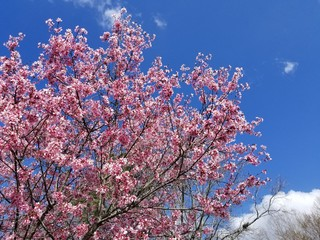 BlossomSkies2